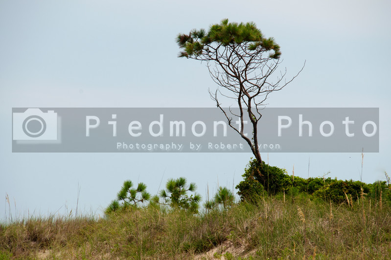 A lone tree standing tall on a sand dune on a deserted beach