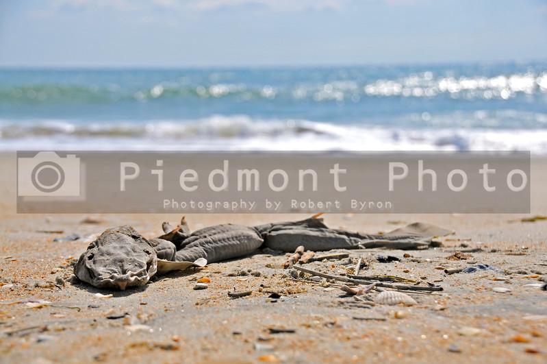 A dead shark getting a tan on the beach
