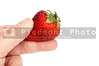 A person holding a delicious fresh strawberry