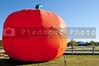 A gigantically huge inflatable vinyl harvest pumpkin