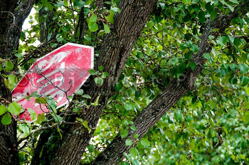 A stop sign in a tree after a severe storm