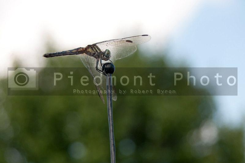 A beautiful dragonfly in the wild outdoors