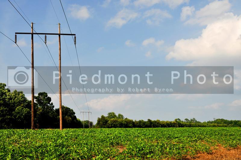 An electrical pole in a sprawling soybean field
