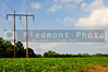 An electrical pole in a sprawling soybean field