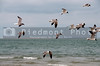 A group of wIld seagulls flying over the ocean