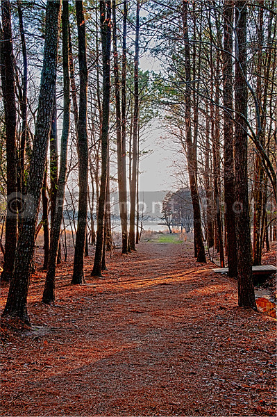 A walking path through a green forest