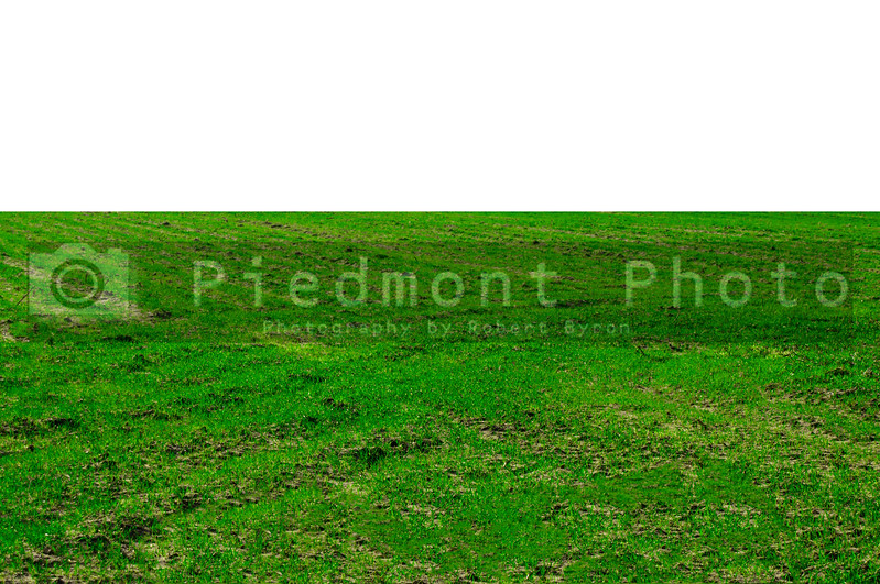 A large grassy field on a sunny day