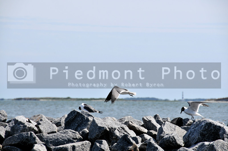 A seagull taking off from a sea wall