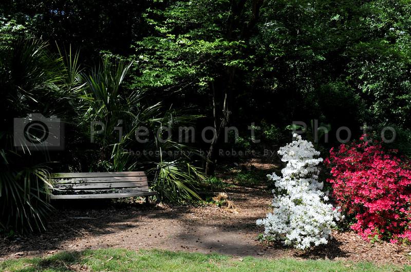 A bench amonst the flowery vegitation of a park