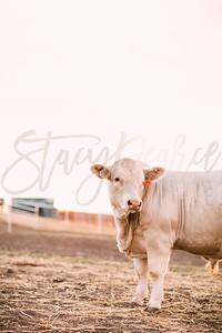 SPC17-CSC-Bulls-8649