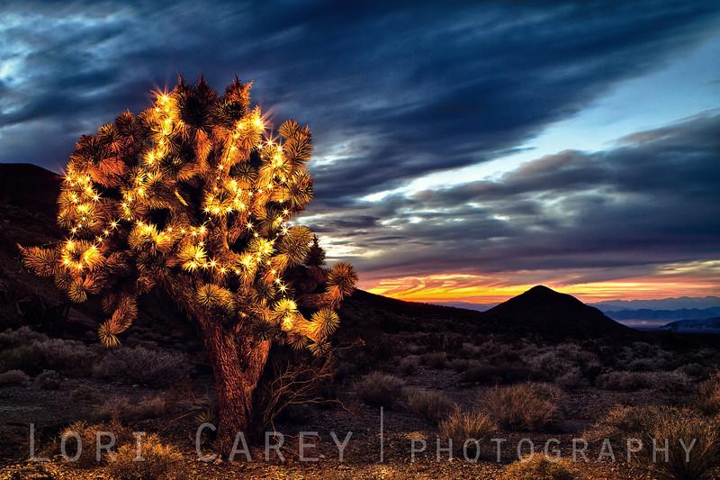 Holiday Joshua Tree in the eastern Mojave
