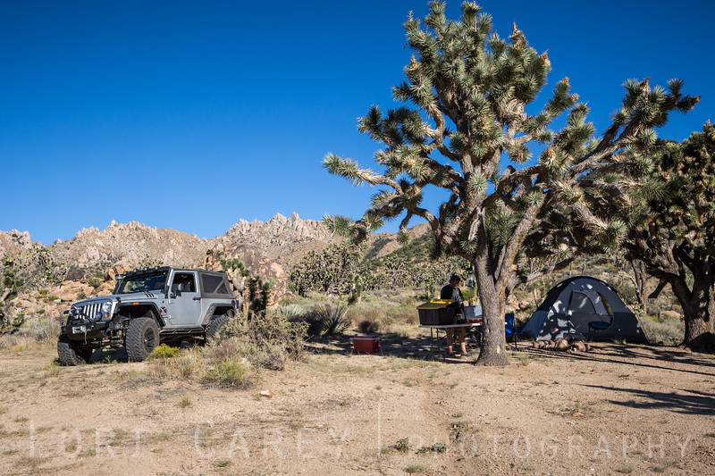 Camping in the shade of Joshua Trees