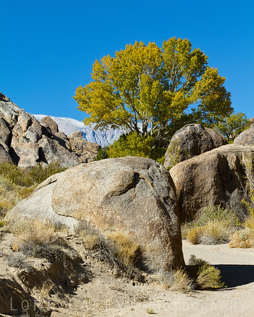 Fall colors in the Alabama Hills, California