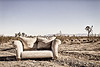 Sofa in Mojave Desert