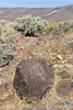 Kawaiisu indian petroglyph at Sheep Springs in the El Paso Mountains, north Mojave desert
