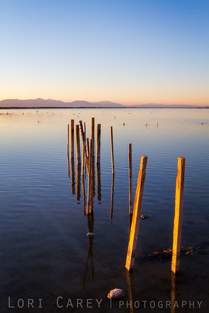 Remains of a dock on the Salton Sea, Calipatria