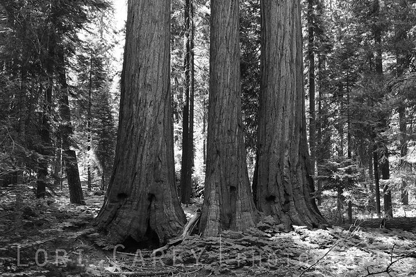 "This group has a name, but I am embarrassed to admit that I ""lost"" it and have not been able to determine. It is not the Three Sisters, but something else related to family. If anyone knows, I'd love to hear from you. Sequoia National Park."