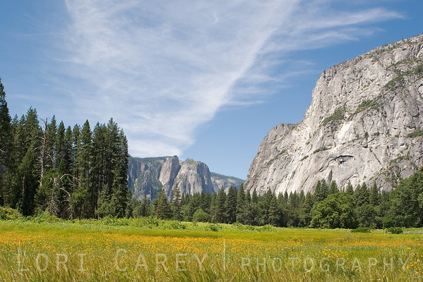 A summer morning in Yosemite Valley.