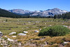 Dana Meadows along Tioga Pass in Yosemite.