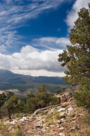View along the Gold Mountain trail in San Bernardino National Forest. View this at a larger size and in the distance you can see the snow covered peaks of the rugged San Gorgonio Wilderness.