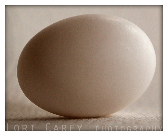The key to everything is patience. You get the chicken by hatching the egg, not by smashing it.<br /> Arnold H. Glasow<br /> <br /> An exercise in white-on-white ambient lighting. An egg, a papertowel, and some windowlight.<br /> 2007