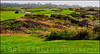 Spanish Bay Golf Course