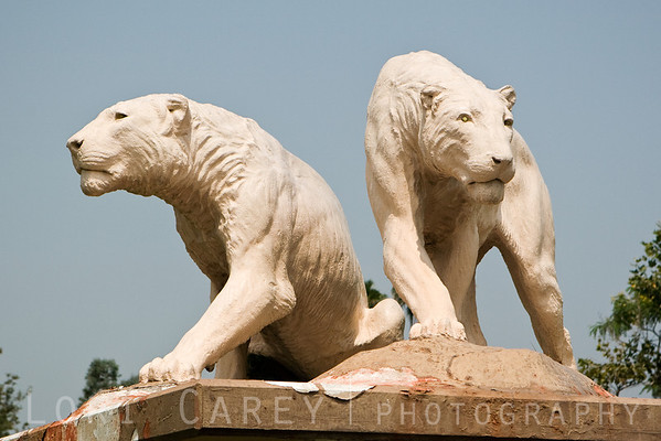 """Lions"" sculpture by Herman T. Beck features two life-sized lions, one walking and one sitting, parallel to one another but facing in opposite directions. The sculpture was commissioned in 1932 and installed in 1935, medium is painted concrete. It is currently on display on a pedestal in Hancock Park/La Brea Tar Pits outside the entrance to the George C. Page Museum in Los Angeles, California, USA. Smithsonian AmericanArt Museum Inventory of American Sculpture Control Number CA000228"