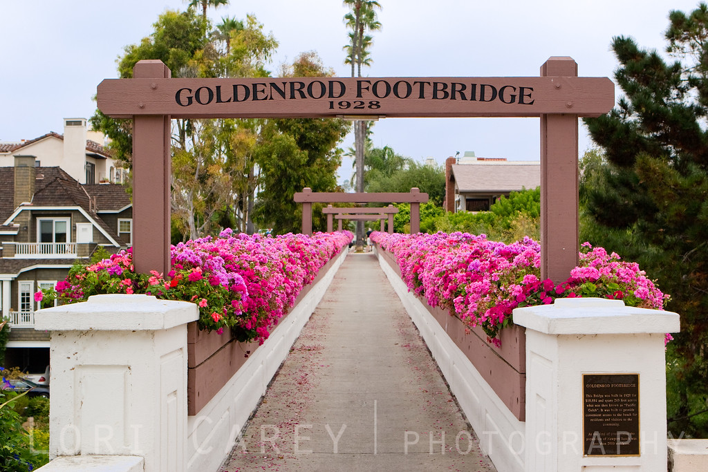 The historic Goldenrod Footbridge is a favorite landmark for locals in the Corona del Mar neighborhood of Newport Beach, California. It was built in 1928 at a cost of $10,884 to provide access from the heart of town across Bayside Canyon (then known as the Pacific Gulch) to the beach at Newport Channel. It's span of 243 feet is lined with boxes of colorful ivy geraniums.