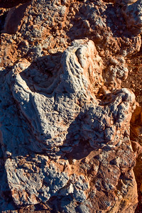 Iguanodon track, Molen Reef, Emery County, Utah