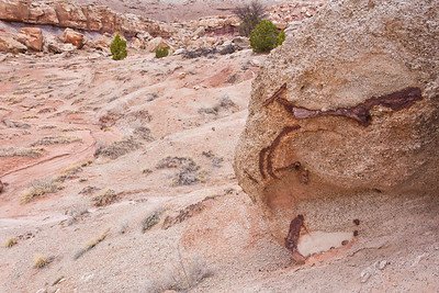 Dinosaur bones, Brushy Basin Member of the Morrison Formation, Molen Reef, Emery County, Utah