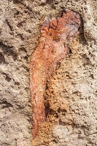 Dinosaur bone, Brushy Basin Member of the Morrison Formation, Molen Reef, Emery County, Utah