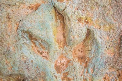 Dinosaur track, Cretaceous, Cedar Mountain Formation, Moab area, Grand County, Utah
