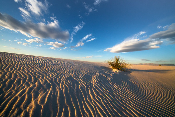 Lines Of Early Morning Patterns At Far End Of White Sands - White Sands National Monument, New Mexico