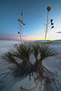 Twilight Golds Amongst The Yuccas - White Sands National Monument, New Mexico