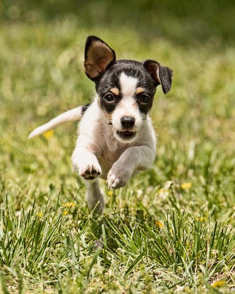 Belle Running