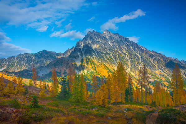 A Grove Of Larches And Mt Stuart - Mt Stuart, Lake Ingalls, Alpine Lakes Wilderness, WA