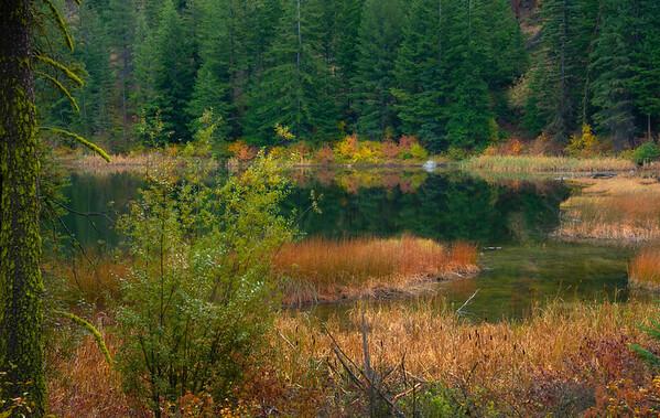 Fall Color Foliage Along Black Pine Lake - Methow Valley, Washington State