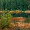 Fall Color Foliage Along Black Pine Lake - Methow Valley, Washington State