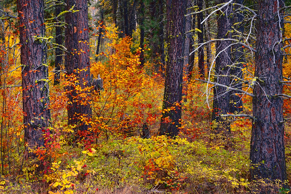 Decorated In Colors In The Methow Valley_ - Methow Valley, Washington State