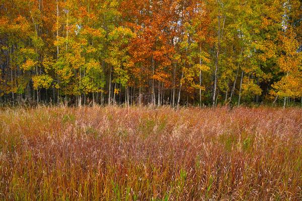 A Garden Of Autumn Foliage - Methow Valley, Washington State