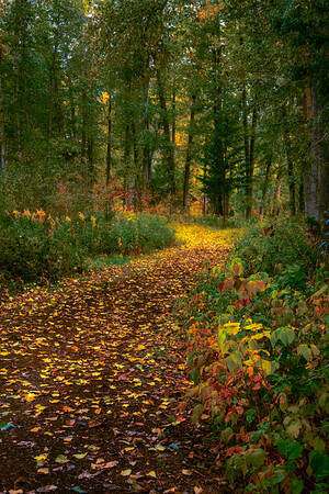 Trails Of Color In The Methow Valley - Methow Valley, Washington State