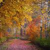 Walking Through The Immersion Of Autumn - Methow Valley, Washington State