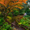 Seattle Japanese Campus Gardens - Seattle Washington