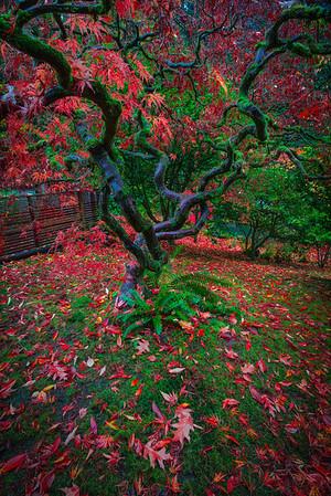 Japanese Gardens, Portland, Oregon_12