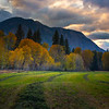 Layers Of Open Gold And Green - Methow Valley, Washington State