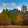 Aspens Out In Open Space - Methow Valley, Washington State