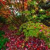 Seattle Japanese Campus Gardens - Seattle Washington