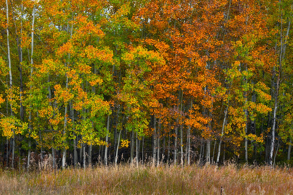 A Collection Of Autumn Colors - Methow Valley, Washington State