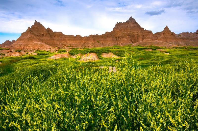 Fields Of Sweet Clover Surround Badlands - Badlands National Park, South Dakota