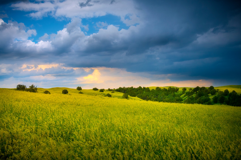 Sunbreaks Shining Through Onto Sweet Clover - Badlands National Park, South Dakota